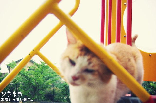 海公園のネコさん
