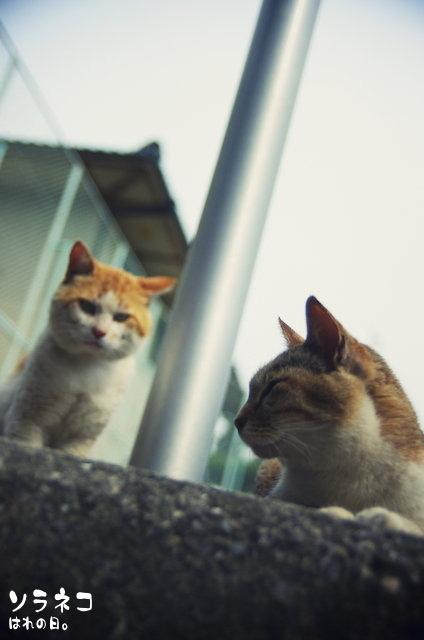 I海公園のネコさん