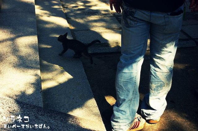 寺のネコさん