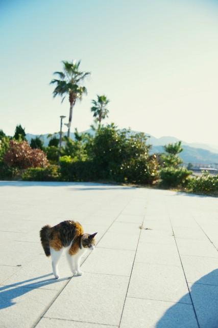 海公園のネコさん、犬さんとご対面中。