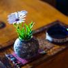 Ai AF Nikkor 35mm f/2Dで撮影した写真