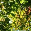 ZenFone 3 SIMフリーで撮影した写真