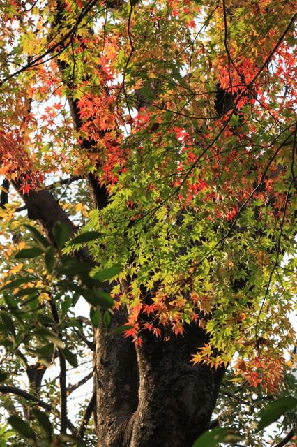 日比谷公園の紅葉2010①