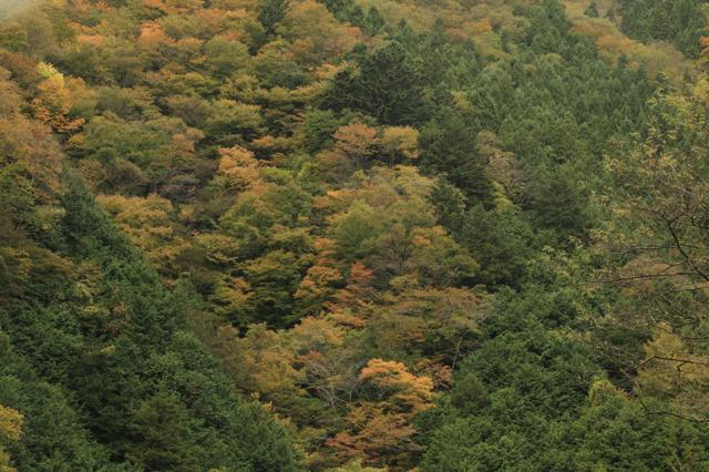中津川峡20101031の紅葉加減4