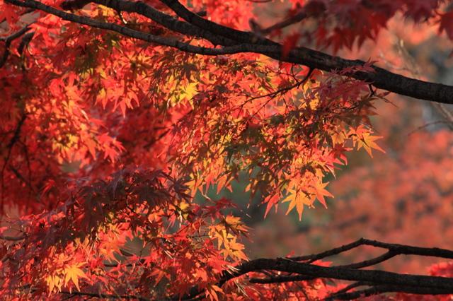 日比谷公園の紅葉2010②