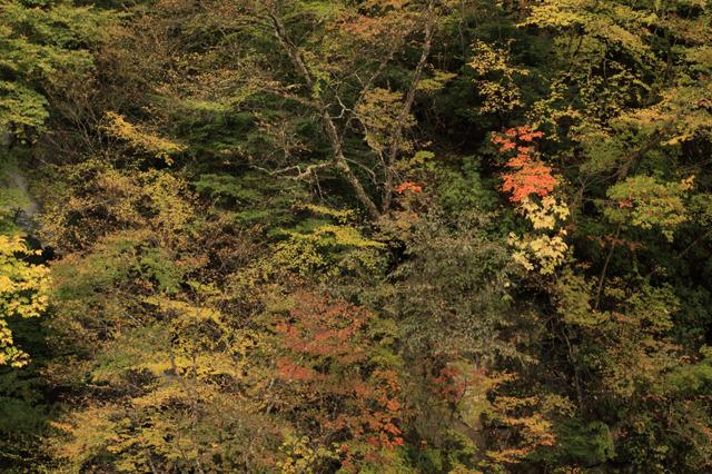 中津川峡20101031の紅葉加減1