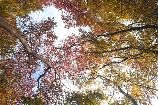 紅葉色の空