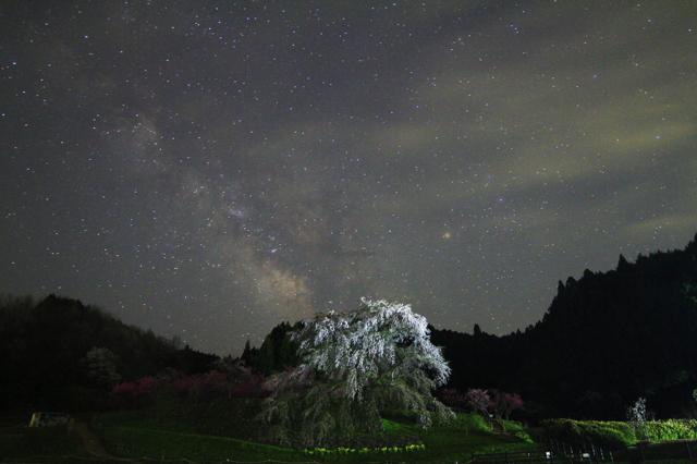 星降る瀧桜