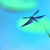 AF-P DX NIKKOR 70-300mm f/4.5-6.3G ED VRで撮影した写真