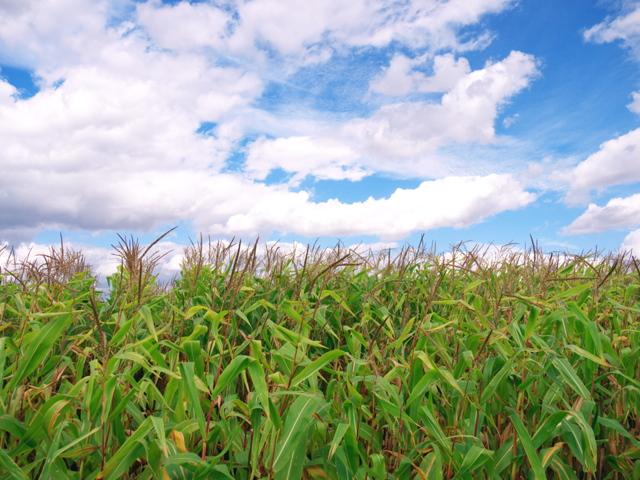 酪農の風景