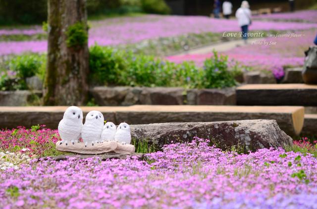花のじゅうたん。