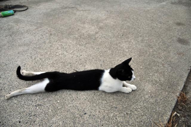 漁港の猫さん。