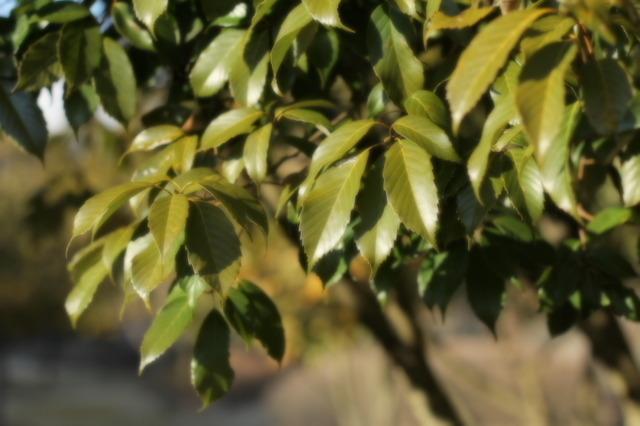 木々の日光浴