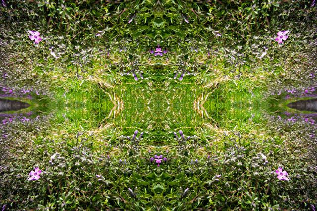「四季」Natural beauty psychedelic