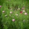 OLYMPUS PEN mini E-PM2 ダブルズームキットで撮影した写真