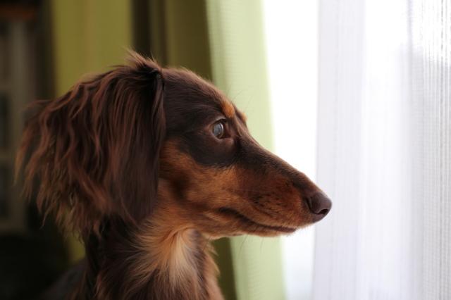 窓際大好き。