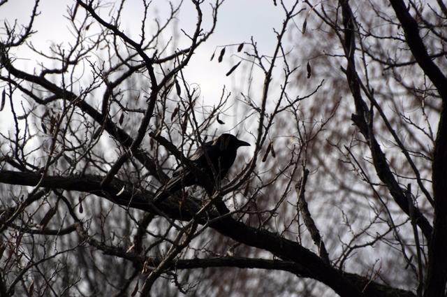 冬景色と鴉。