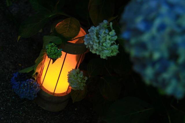 灯篭に紫陽花。