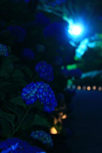 青の閃光。