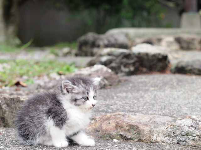 子猫だよ。