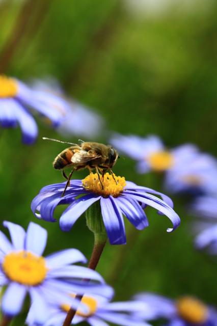 初めての蜂写真(笑)