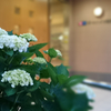 Xperia A4 SO-04G docomoで撮影した写真