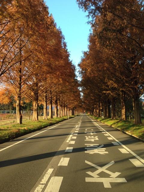 夕暮れの並木道