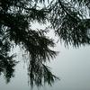 DIGNO DUAL 2 WX10K WILLCOMで撮影した写真