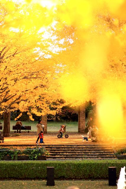 黄金の木漏れ日