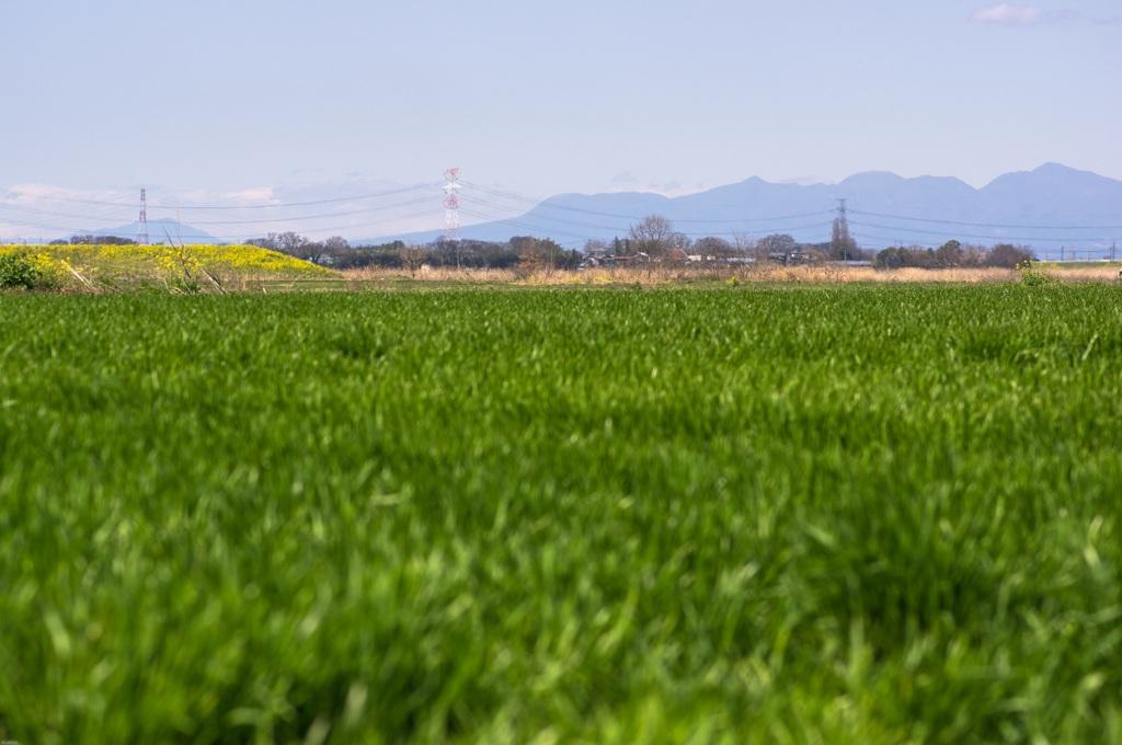 麦畑に赤城山