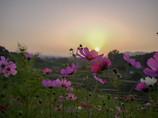 M.ZUIKO DIGITAL 17mm F2.8で撮影した写真