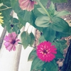 PANTONE 3 SoftBank 001SH [イエロー]で撮影した写真