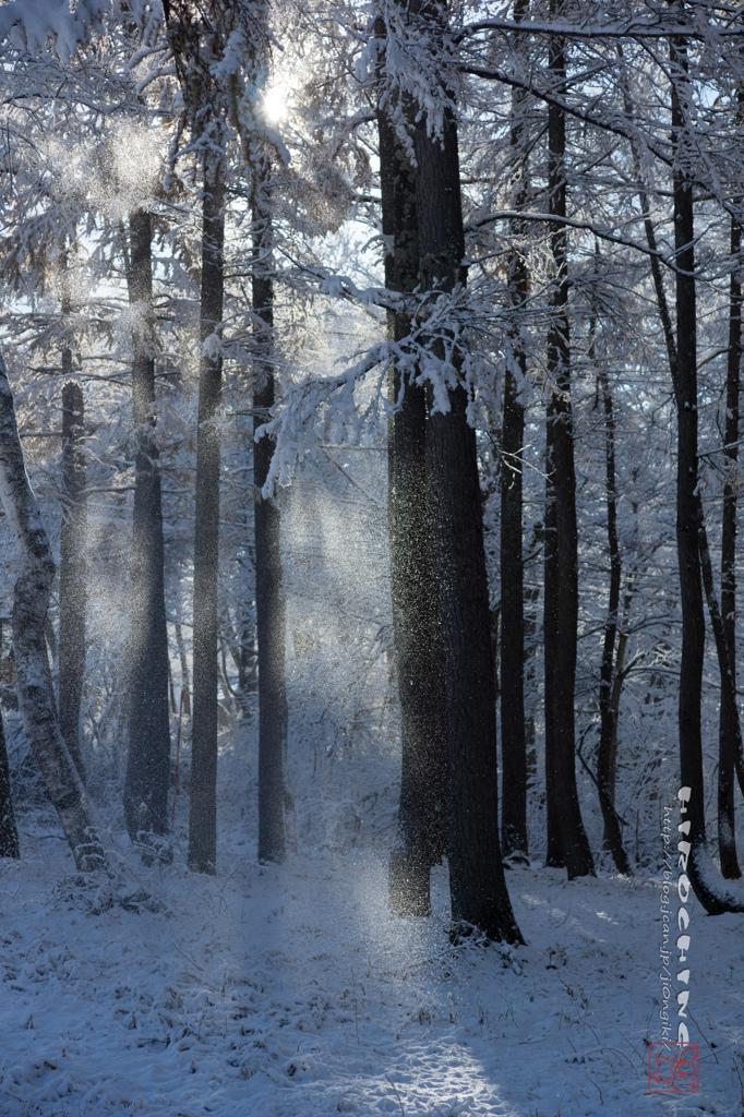 雪のベール