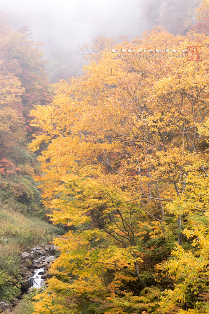 秋色の誘い