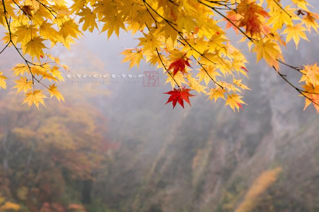 秋色の誘い3