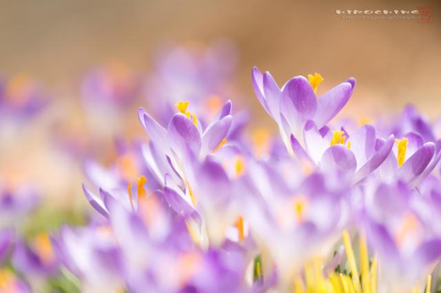 春のまぶしさ