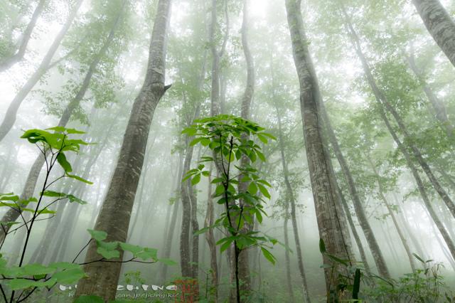 深山の森Ⅱ