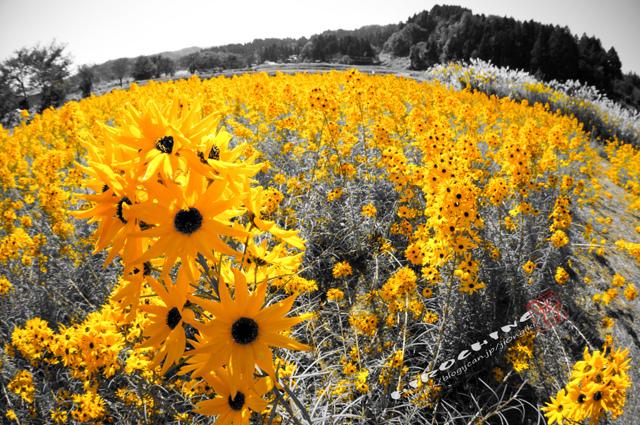YellowにEnding