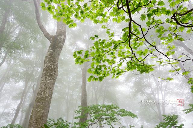 朧の森に佇んで