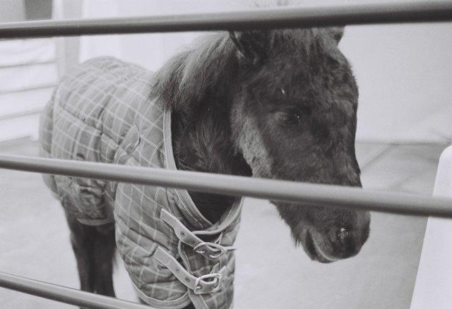 MINOLTA(ミノルタ)のカメラ ライツミノルタ CLで撮影した動物(神田明神初詣)の写真(画像)