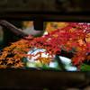 smc PENTAX-DA 18-135mmF3.5-5.6ED AL[IF] DC WRで撮影した写真