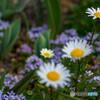 smc PENTAX-DA★ 55mmF1.4 SDMで撮影した写真