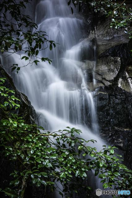 照葉樹林の滝