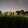 AF DX Fisheye-Nikkor 10.5mm f/2.8G EDで撮影した写真