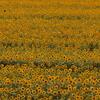 LUMIX G VARIO 12-32mm/F3.5-5.6 ASPH./MEGA O.I.S. H-FS12032-S [シルバー]で撮影した写真