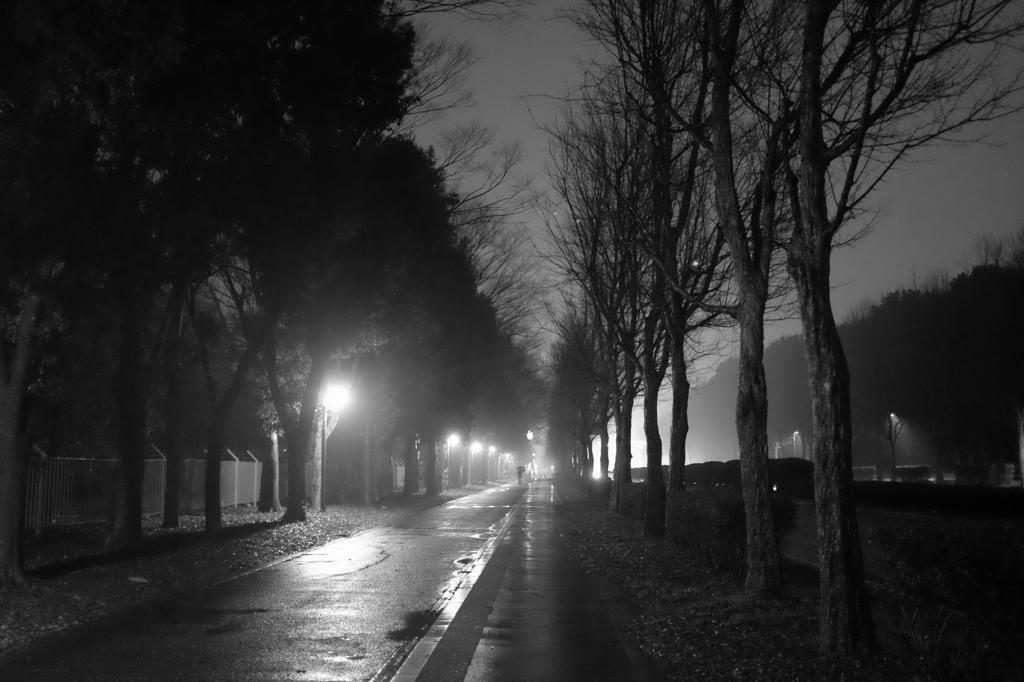 雨の歩道(つくば東大通り)