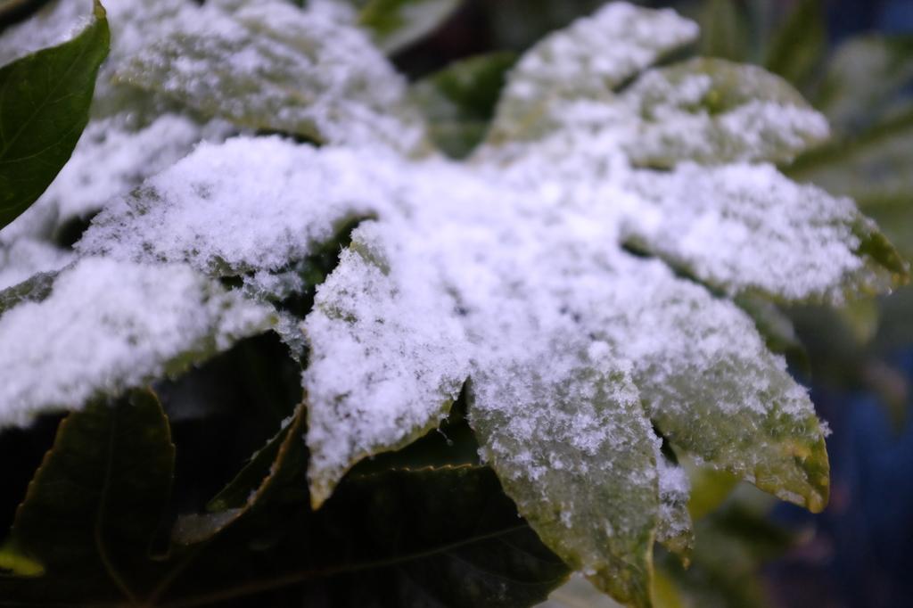 東京積雪 #2