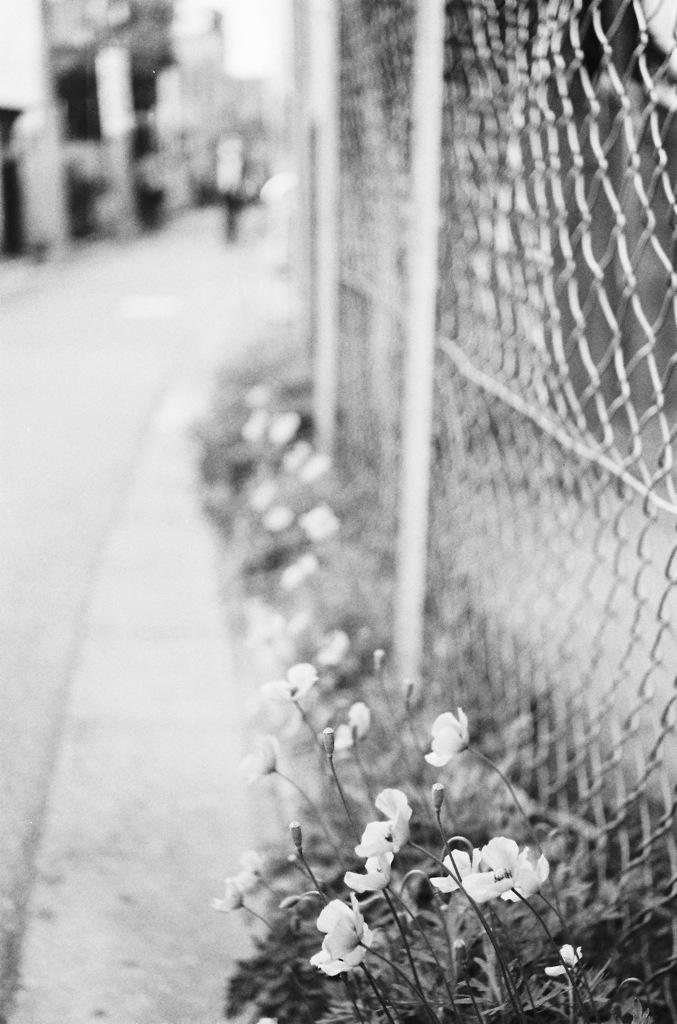 春ノ記憶 #9