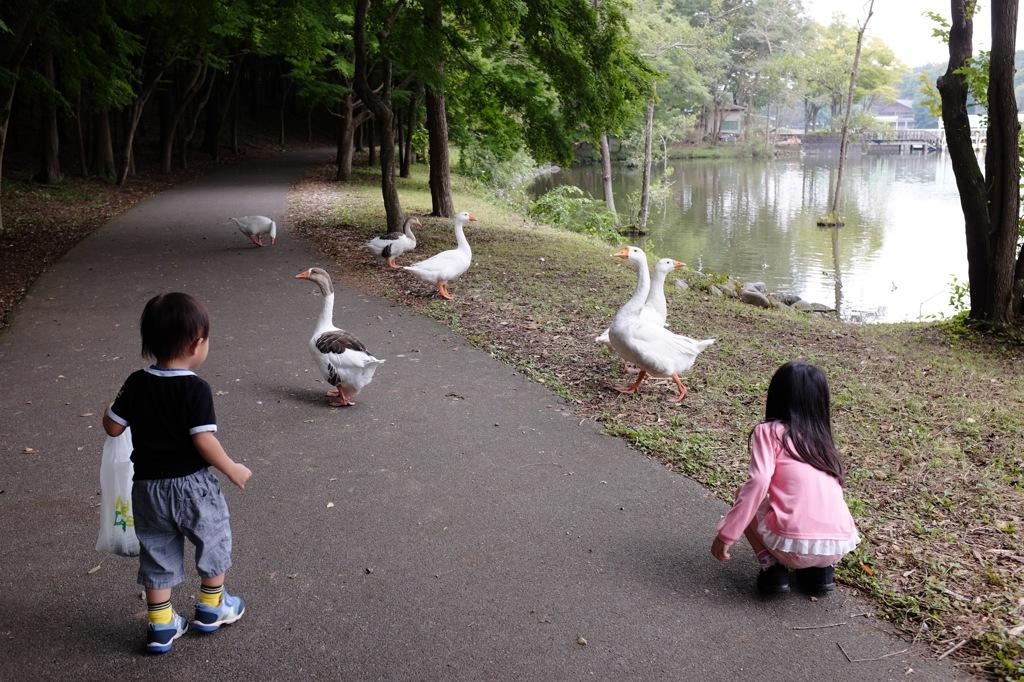 栃木にて(秋の公園散歩) #2