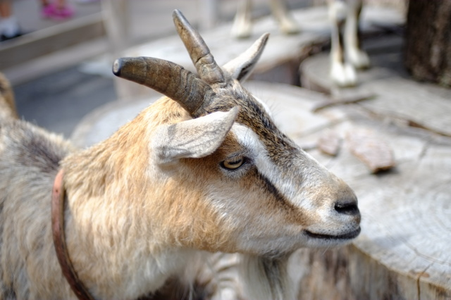 上野動物園にての画像(写真)